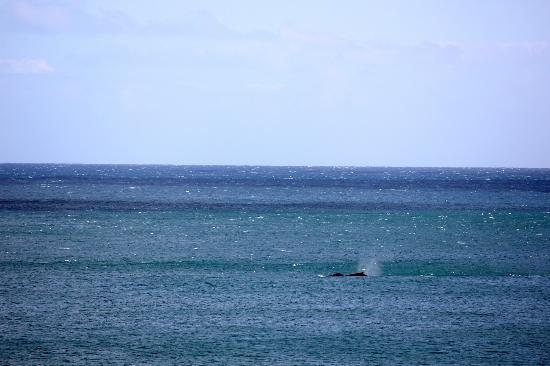 Camps Bay, Sudáfrica: Whales - room view