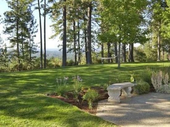 Sierra Sun Cloud Inn: Lawns