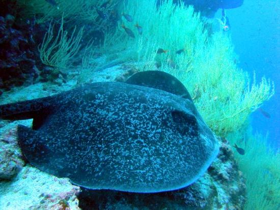 Galapagos Underwater: Raaya