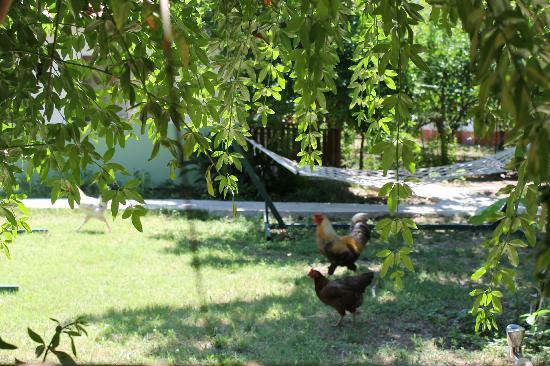 Kiyi Pansiyon : Giardino