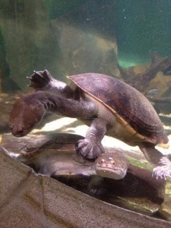SeaQuarium: Nessie!