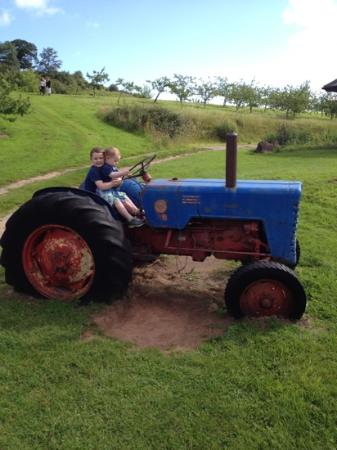 Torre Cider Farm: boys driving the tractor