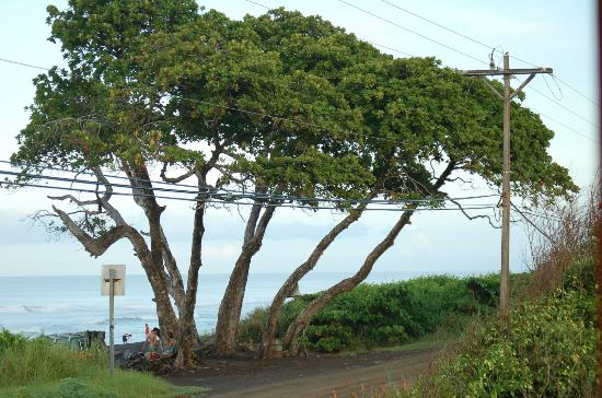 Hermosa Bungalows: View of the Almond Tree surf spot right outside Bungalow #1