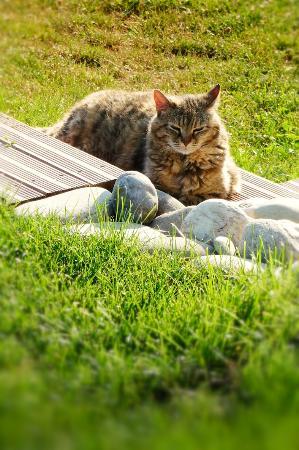 "Couleur Lavande: ""Chatterbox"", the house cat."