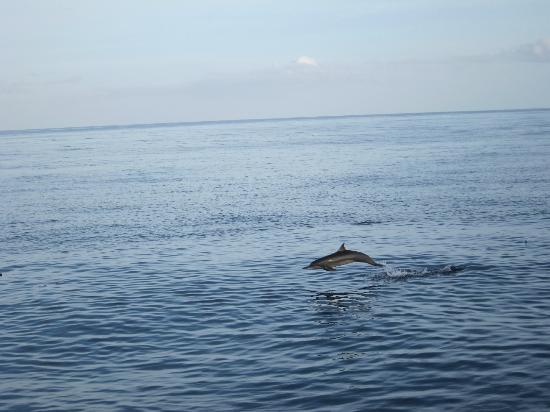 The Residence Maldives: the dolphin