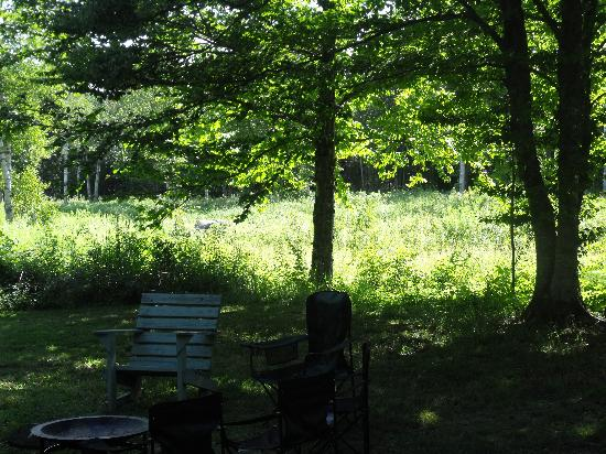 Bocabec Country Garden Cottages: View from the cabin