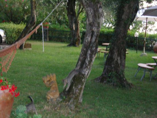Gardasee Apartments: Kittens playing in communal garden