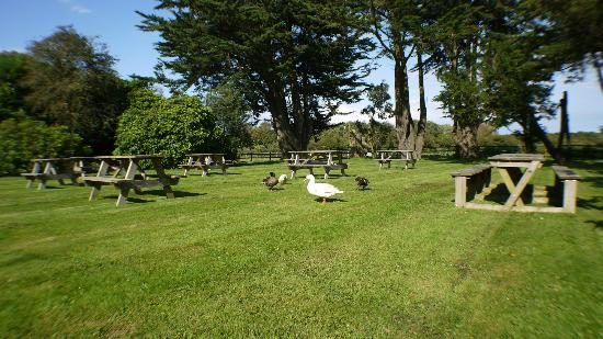 Norden House: Say hello to our Ducks who love the garden as much as us