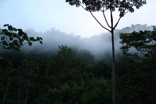 Pacuare Lodge: Morning fog