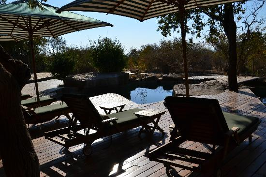 Rhulani Safari Lodge: The pool