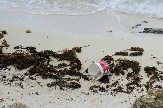 """Tahaa, Polinesia Francesa: Secchielli, e buste di plastica sul bagnasciuga della spiaggia """"privata"""""""