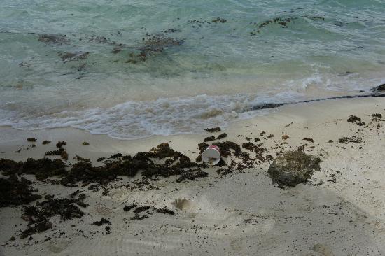 """Tahaa, Polinesia Francesa: Un """"po"""" di alghe (in 4 giorni, mai pulite)"""
