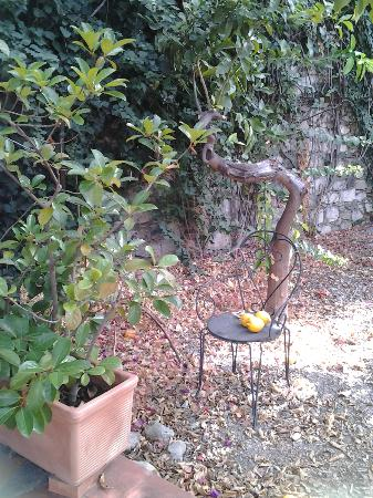 Villa Carmelas: Sicilian lemon trees with wonderful odour