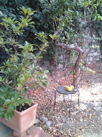 Villa Carmelas: Sicilian lemon trees with wonderful odour 