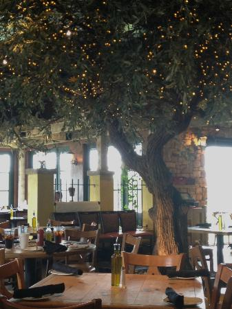 Bella Notte: olive tree in dining area