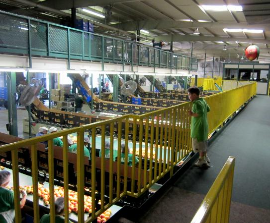 Fort Valley, GA: Peach Factory Tour. We were in the yellow cat walk above all of the action.