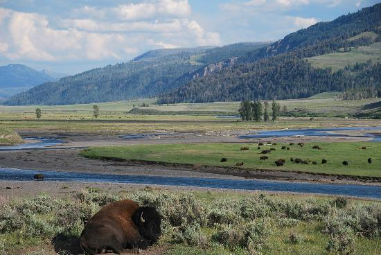 Headwaters of the Yellowstone Bed and Breakfast: Beautiful Lamar valley in northeast Yellowstone