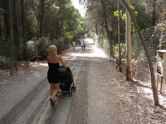 Scanzano Jonico, Italië: Il percorso nella pineta verso la spiaggia