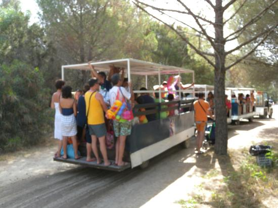 Scanzano Jonico, Italy: Il treno navetta per la spiaggia superaffollato e in comune con il Villaggio Torre del Faro