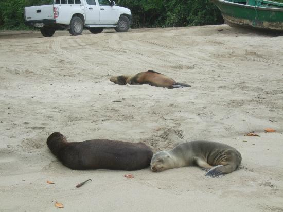 La Casa de Marita: sea lions napping at beach near dock near hotel