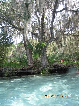 Ocala National Forest: View from the spring