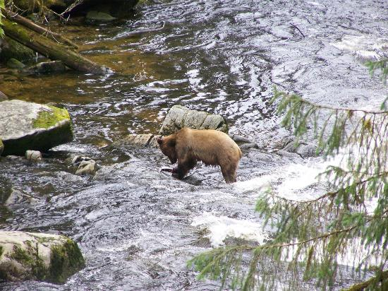 Anan Creek Bear Observatory: Fishing
