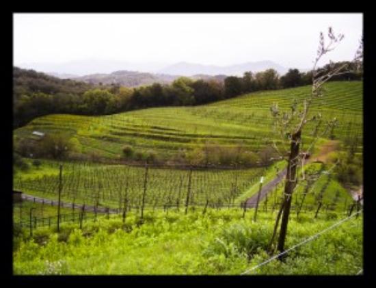 Provence Marinaside Photo