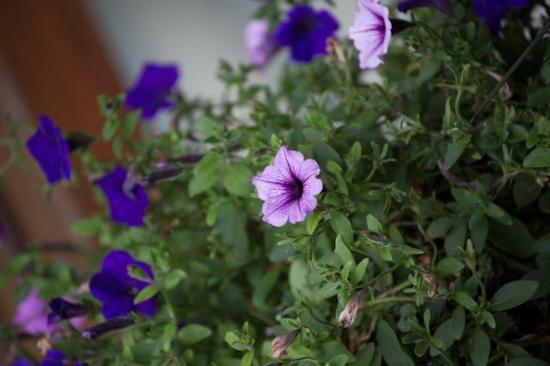 Great Gully Lodge: Flowers on the balcony