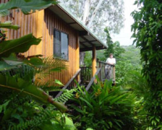 ‪Milkwood Lodge Rainforest Retreat‬