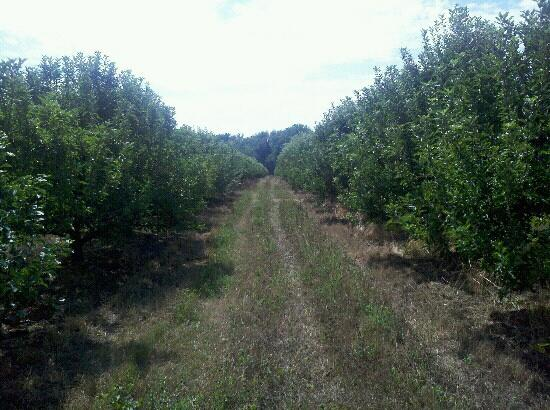 South Haven, MI: Orchard