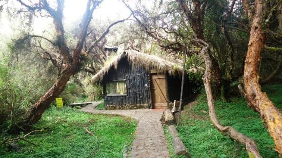 Polylepis Lodge