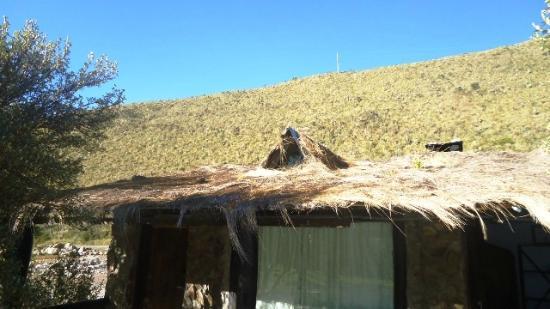 El Angel, Эквадор: POLYLEPIS LODGE