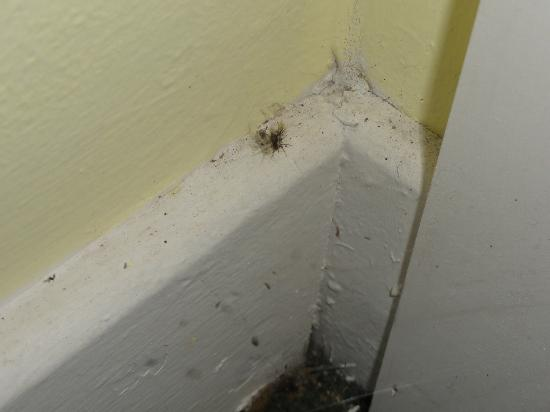 Days Inn by Wyndham Bar Harbor: Spiders in room