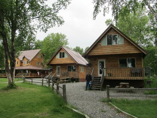Susitna River Lodging: Lovely trees and cabins.