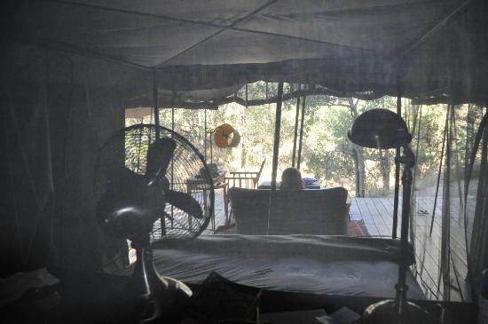 Honeyguide Tented Safari Camps: View behind bed