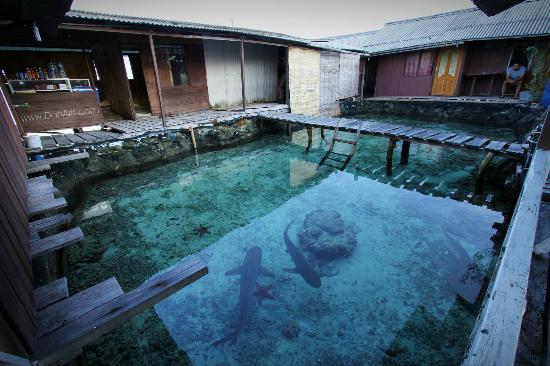 Wisma Apung Karimunjawa: a shark pool
