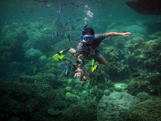 Java, Indonesië: feeding the fish underwater