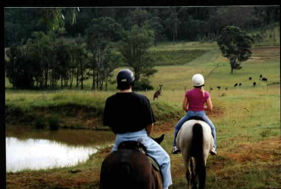 ‪‪Hill Top Country Guest House‬: Horse Riding with the Kangaroos‬