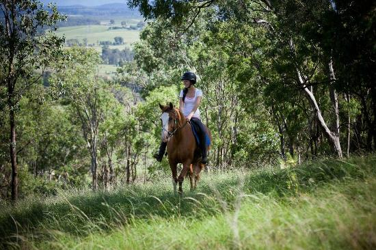 Hill Top Country Guest House : Riding  the  Molly Morgan  Range at Hill Top
