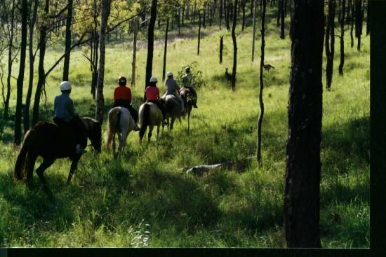 Hill Top Country Guest House: Trail Riding