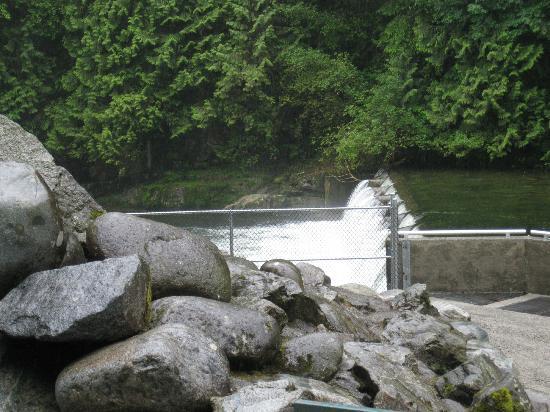 Capilano Salmon Hatchery: Channel