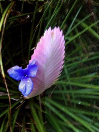 Le Parc aux Orchidées : UNE DES MAGNIFIQUES FLEURS DU PARC