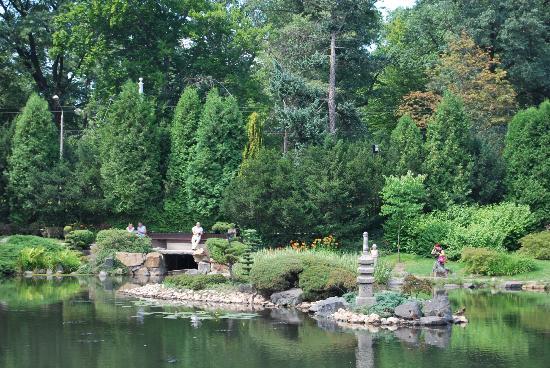 Japanese Garden - Szczytnicki Park: Treescape