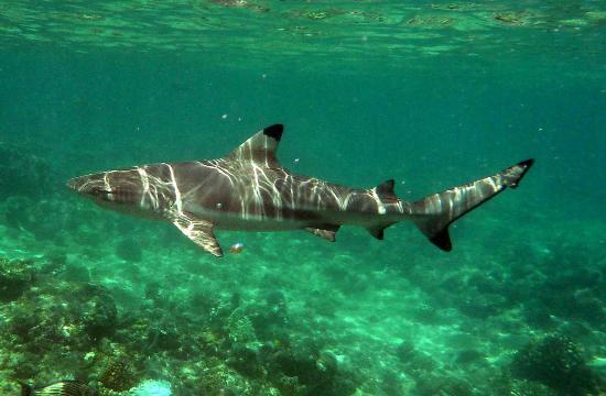 Bandos: un simpatico e innocuo (se non disturbato) abitante del reef