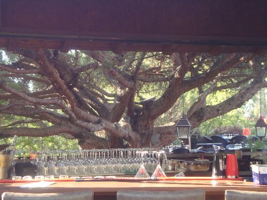 Parrilla Natural : One of the tree's perfectly framed by the outside bar
