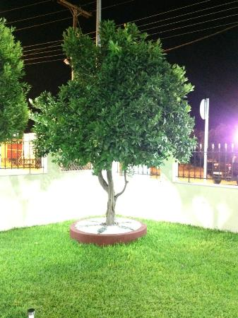 Triton Apartments: Tree in the front yard