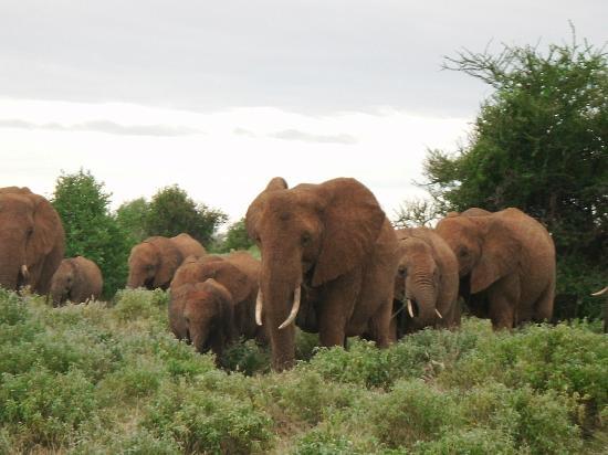 Sun N Sand Beach Resort: Elephants