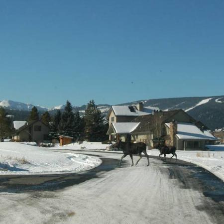 Park Condominiums: View From Park Condos B