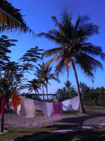 Baobab Beach Backpackers: Giardino del Baobab