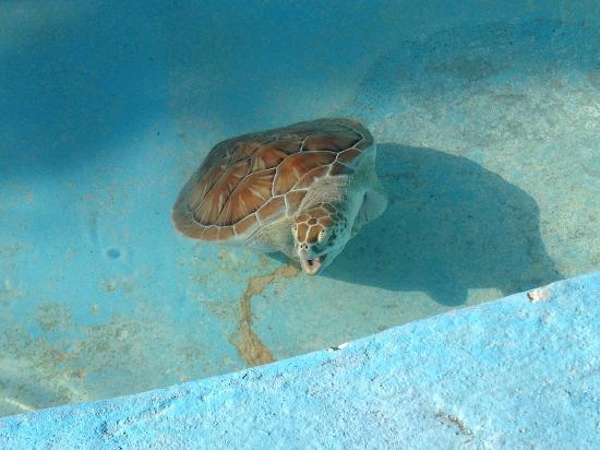 la riserva di tartarughe - Foto di Cayo Largo, Cuba - TripAdvisor